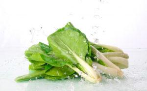 小松菜の生産量ランキング、4位はまさかの!