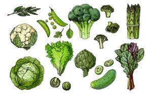 ビタミンと食物繊維が豊富 お弁当の彩り『緑』